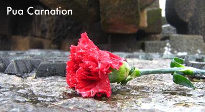 Pua Carnation