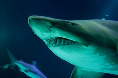 世界で最も鮫が出没するビーチ